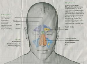 Nasen-und-Stirnöhlen-1024x752